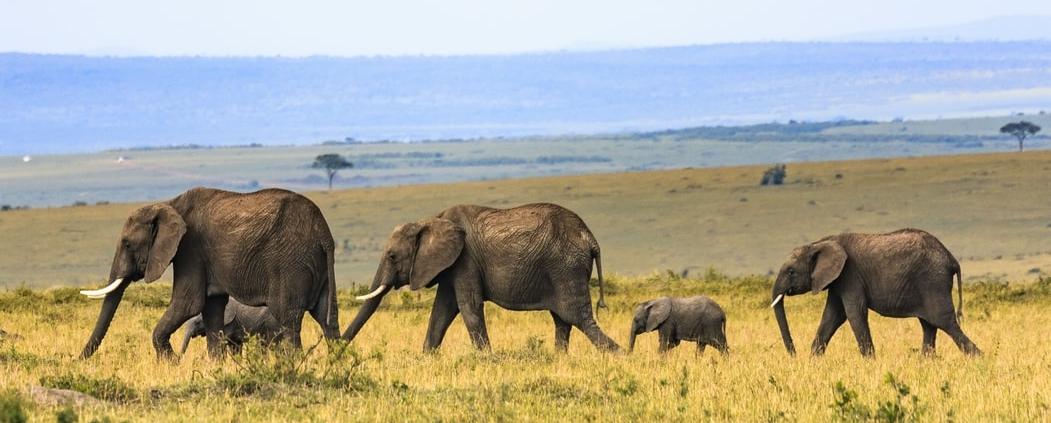 Los 5 mejores parques africanos para ver a los Cinco Grandes