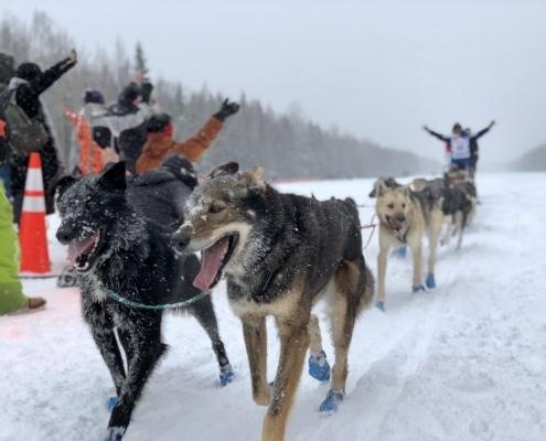 Los 6 mejores lugares para un paseo en trineo de perros