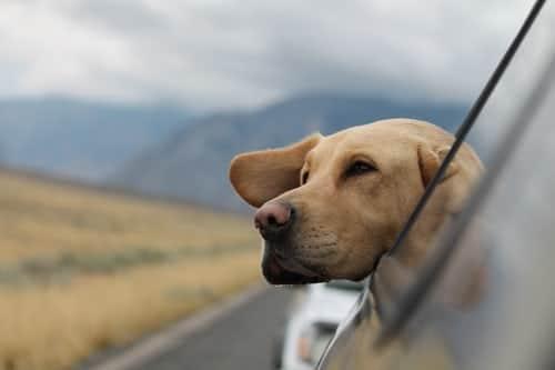 Todo sobre volar con tu perro